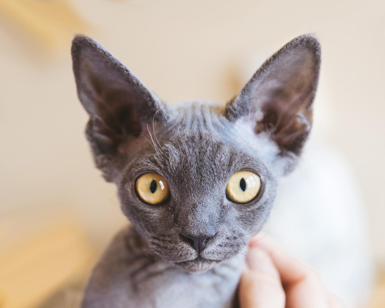 Котёнок: домашнее животное, которое способно создать уют в доме